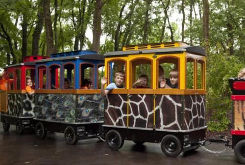Wattman Zoo Edition
